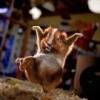 Mains jointes - dernier message par le hamster