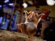Photo de le hamster